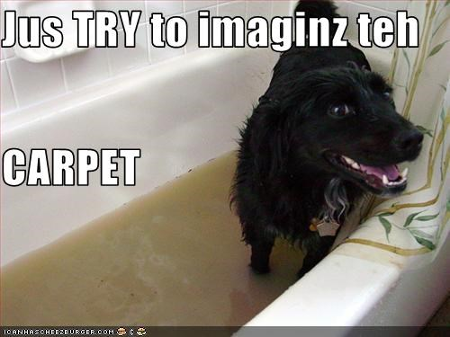 Jus TRY to imaginz teh  CARPET