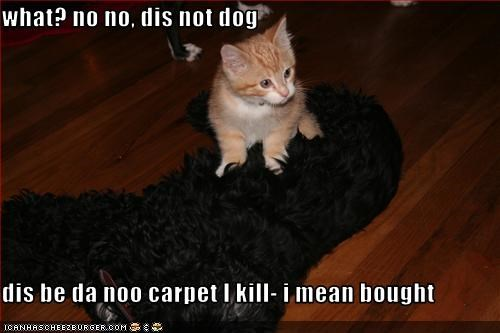 what? no no, dis not dog  dis be da noo carpet I kill- i mean bought