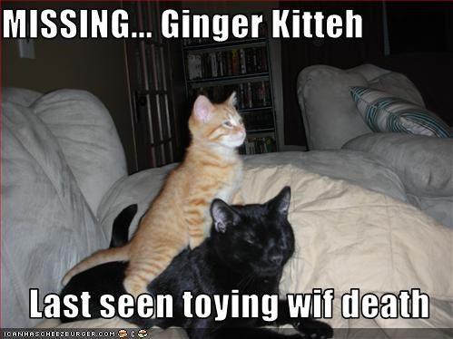 MISSING... Ginger Kitteh  Last seen toying wif death