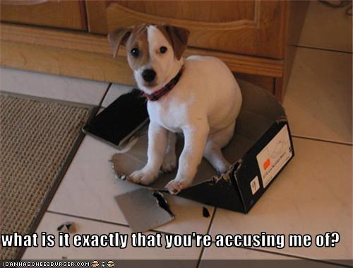 box,destroyed,jack russel terrier