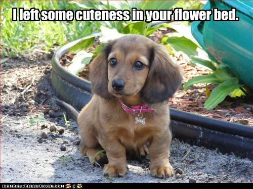 I left some cuteness in your flower bed.