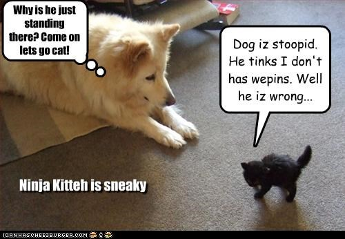 Dog iz stoopid. He tinks I don't has wepins. Well he iz wrong...