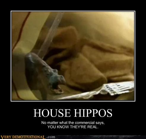 WTF Are House Hippos?