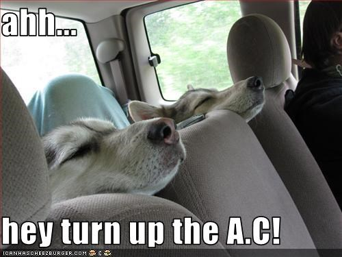 air conditioning,car,cool,driving,riding,whatbreed