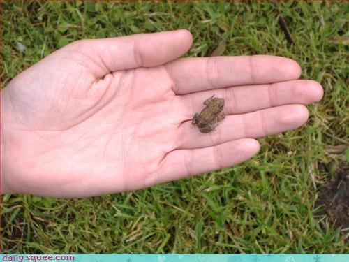 cute,frog,so tiny