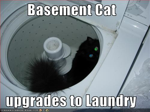 Basement Cat  upgrades to Laundry