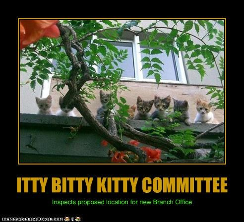 ITTY BITTY KITTY COMMITTEE