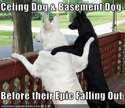 Celing Dog & Basement Dog  Before their Epic Falling Out