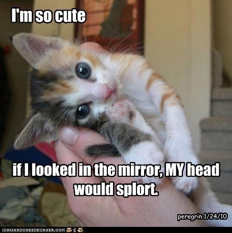 I'm so cute