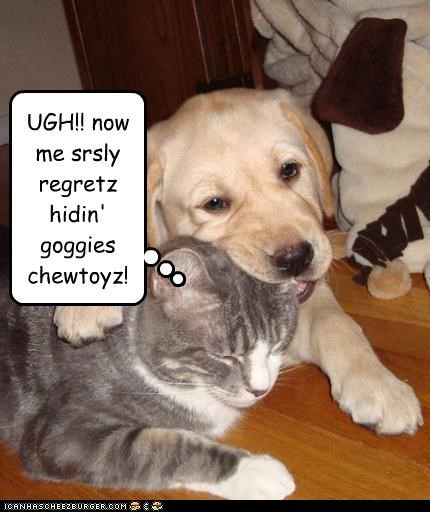UGH!! now me srsly regretz hidin' goggies chewtoyz!