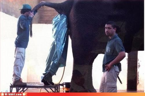 Some Days You're The Elephant, Some Days You're The Zookeeper