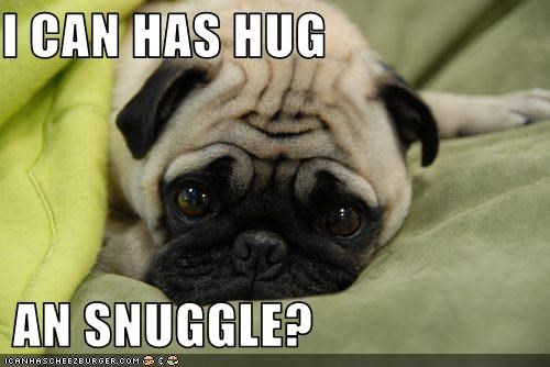 I CAN HAS HUG   AN SNUGGLE?