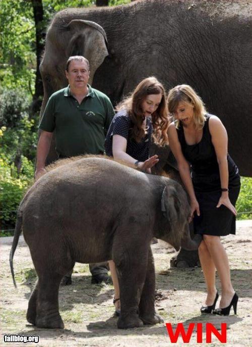 elephant,inappropriate,skirt,trunk,win,woman