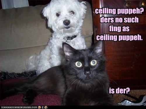 ceiling puppeh? ders no such fing as  ceiling puppeh.      is der?