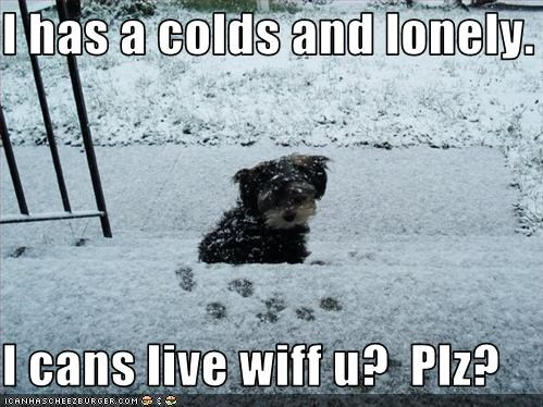 I has a colds and lonely.  I cans live wiff u?  Plz?