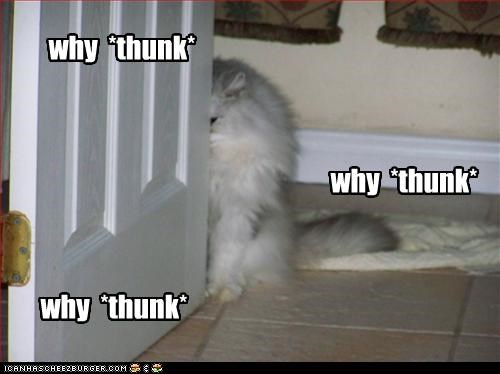 why  *thunk*