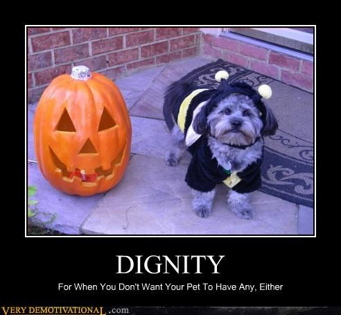 Dogs Love Costumes