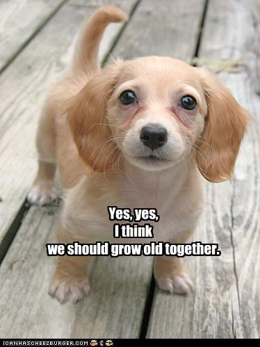 Yes, yes,  I think we should grow old together.