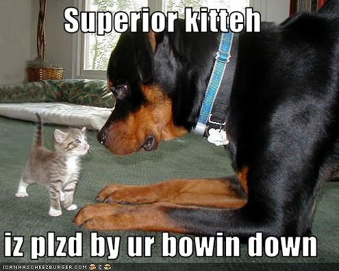Superior kitteh  iz plzd by ur bowin down