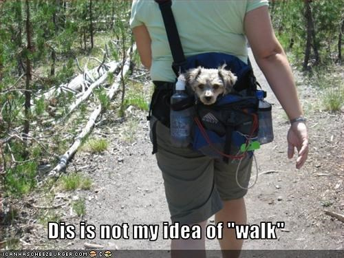 "Dis is not my idea of ""walk"""