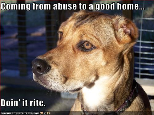 Coming from abuse to a good home...  Doin' it rite.