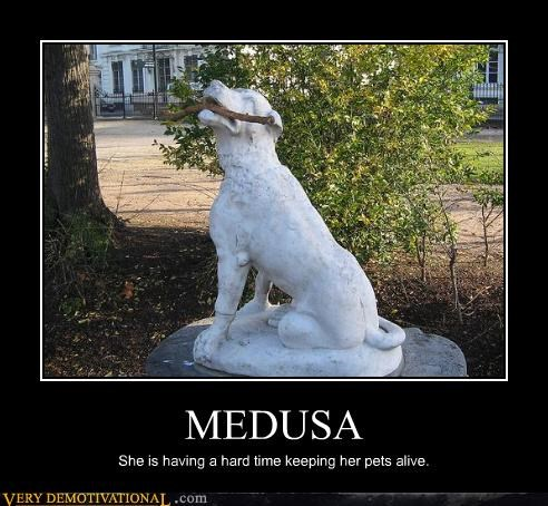 dogs,stone,medusa,statue