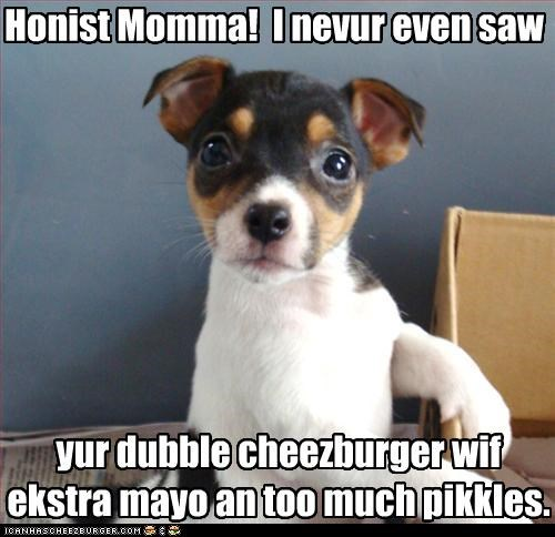 cheezburger,eat,food,jack russel terrier,pickles,puppy,steal