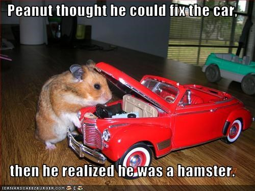 Peanut thought he could fix the car,  then he realized he was a hamster.