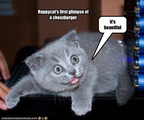 Happycat's first glimpse of a cheezburger