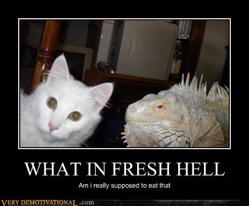cat,lizard,food