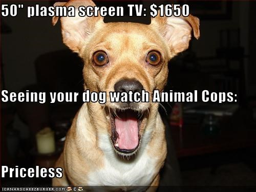 "50"" plasma screen TV: $1650 Seeing your dog watch Animal Cops: Priceless"