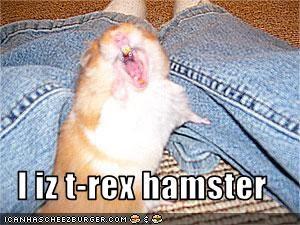 I iz t-rex hamster