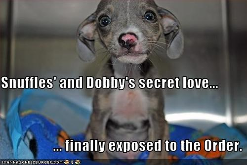 Snuffles' and Dobby's secret love...                   ... finally exposed to the Order.