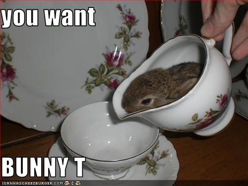 you want   BUNNY T