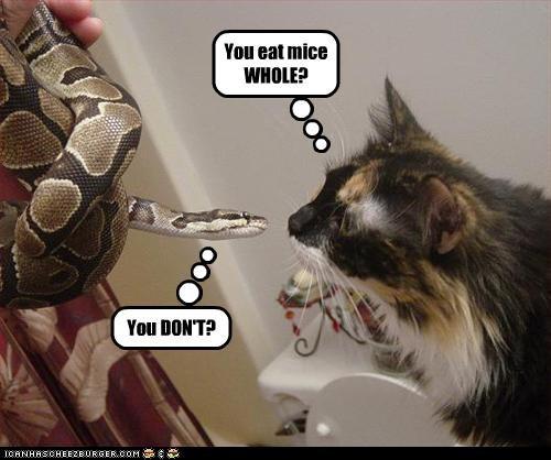 You eat mice WHOLE?