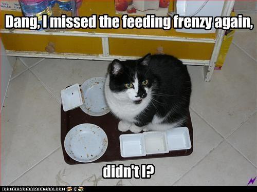 Dang, I missed the feeding frenzy again,