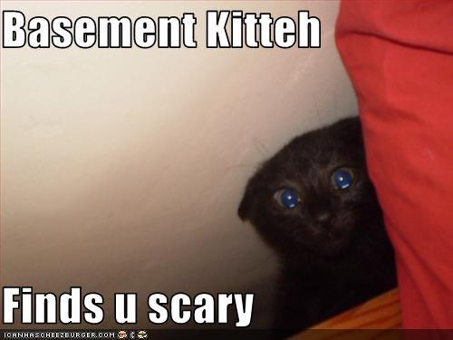 Basement Kitteh  Finds u scary