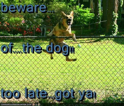 beware... of....the dog!! too late...got ya!