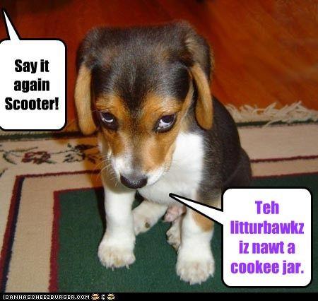 beagle,eat,poop,puppy