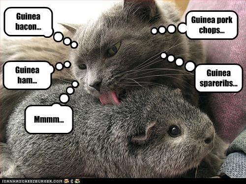 Guinea bacon...