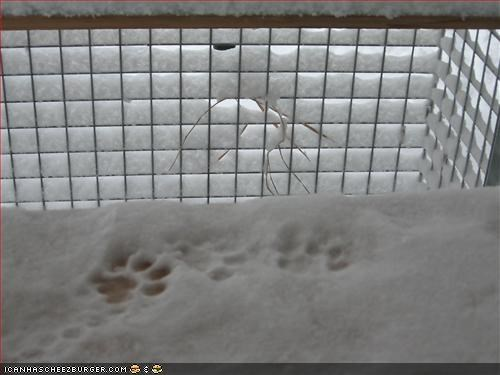 Snowy ground with feline footprints in it