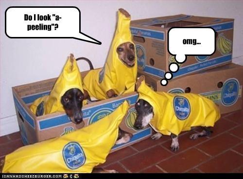 banana,corny,costume,dachshund,joke,peel,puns