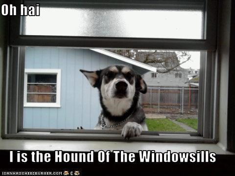 Oh hai  I is the Hound Of The Windowsills