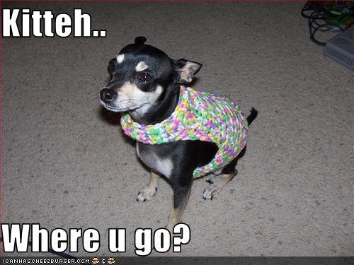 Kitteh..  Where u go?