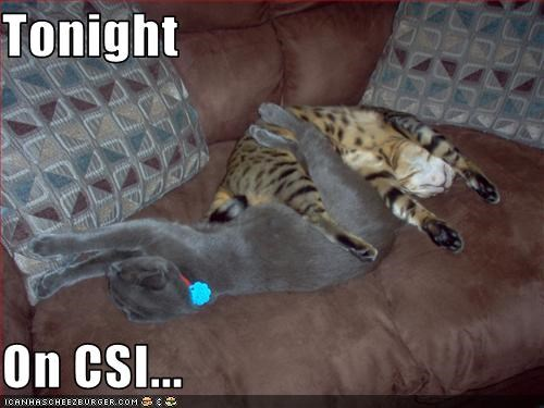 Tonight  On CSI...