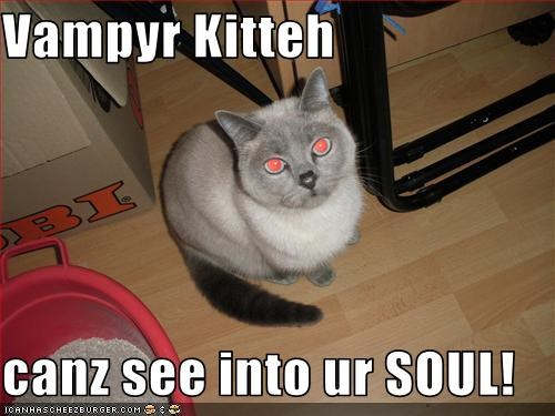 Vampyr Kitteh  canz see into ur SOUL!