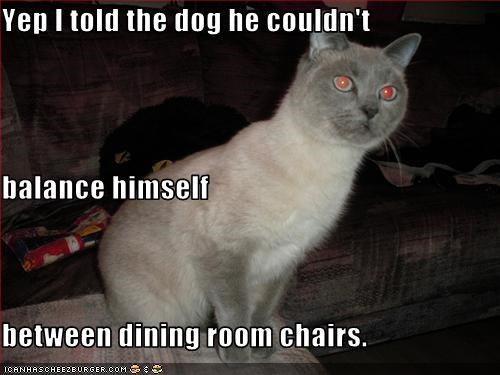 Yep I told the dog he couldn't  balance himself  between dining room chairs.