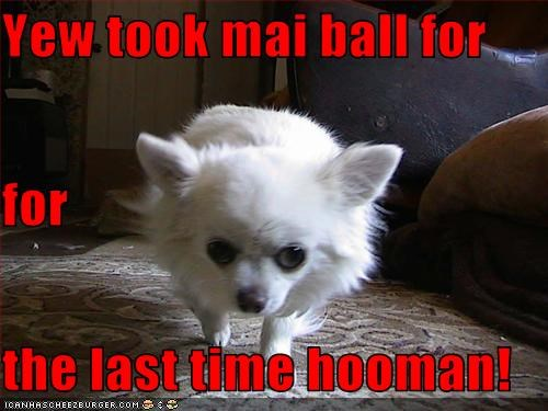 Yew took mai ball for for the last time hooman!
