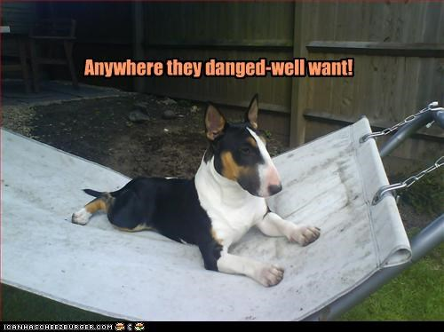 Where do bull terriers sit?
