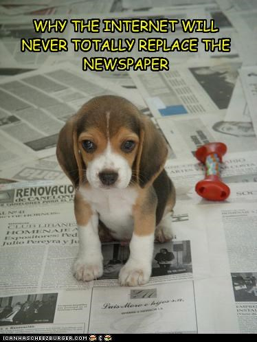 beagle,internet,newspaper,pee pads,potty,puppy
